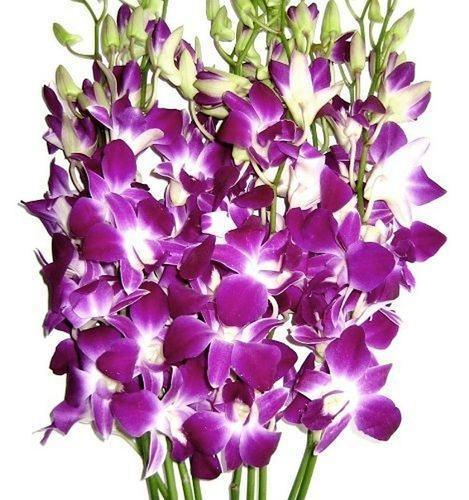 How to grow orchid flowers
